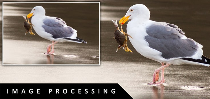 top-five-benefits-of-image-processing-service